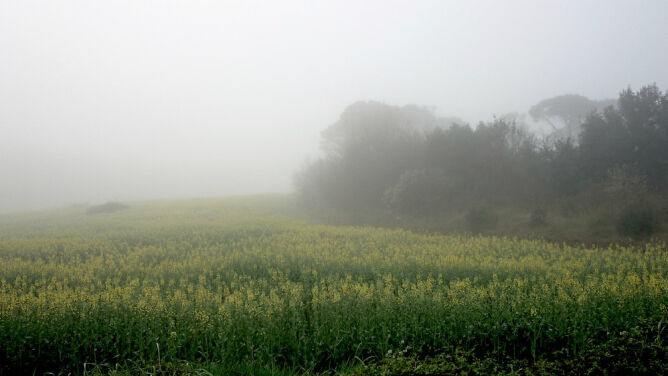 Prognoza pogody na dziś: poranne mgły, lokalny deszcz i burze