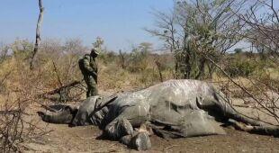 Tajemnicza śmierć słoni rozwikłana